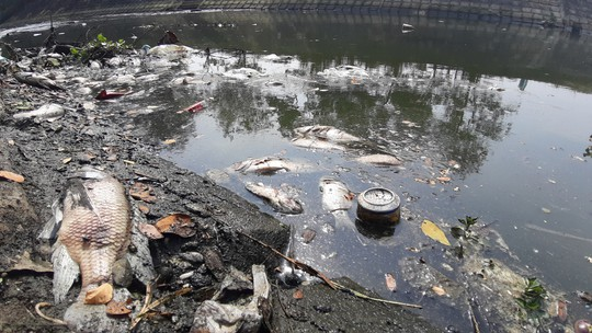 Đà Nẵng: Cá chết trắng kênh cạnh trạm xử lý nước thải - Ảnh 3.