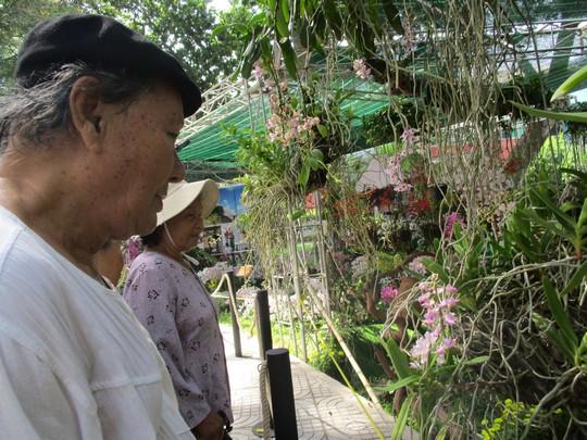 Festival Hoa lan TP HCM khai mạc, miễn phí cho khách tham quan - Ảnh 9.