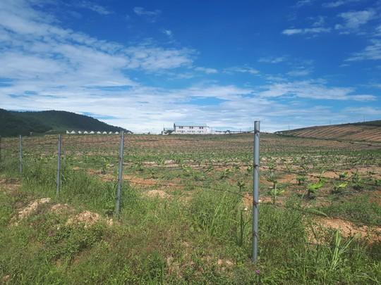Rà soát tổng thể dự án ngàn tỉ chăn nuôi bò liên quan tới cha con ông Trần Bắc Hà - Ảnh 4.
