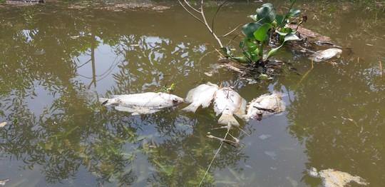 Cá chết nổi đầy sông Bàn Thạch - Ảnh 1.
