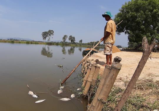 Cá chết nổi đầy sông Bàn Thạch - Ảnh 2.