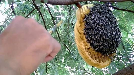 Đi lấy mật, người đàn ông bị ong đốt rơi xuống đất tử vong - Ảnh 1.