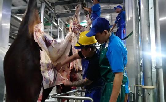 Bất ngờ 1.600 con trâu bò Úc mất dấu tại Việt Nam - Ảnh 1.