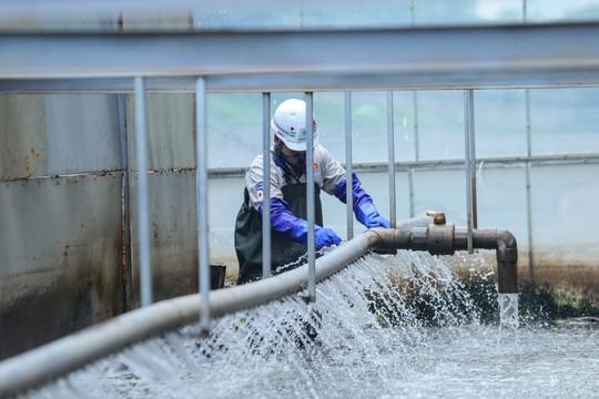 Dự án thử nghiệm thí điểm làm sạch sông Tô Lịch được tài trợ 100% cho Việt Nam - Ảnh 2.