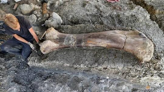 Xương đùi nửa tấn hé lộ siêu quái vật tiền sử - Ảnh 1.