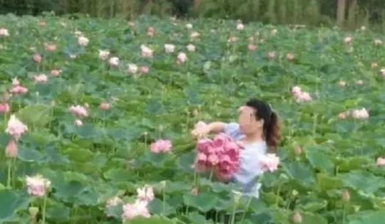 Ngỡ ngàng cảnh hàng trăm du khách Trung Quốc leo rào hái trộm hoa - Ảnh 2.