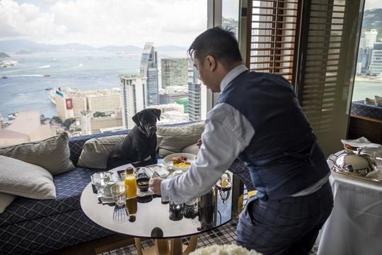Thú cưng được khách sạn cao cấp chiều chuộng - Ảnh 7.