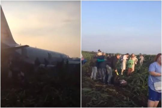 Máy bay tông vào đàn chim, 23 người bị thương - Ảnh 1.