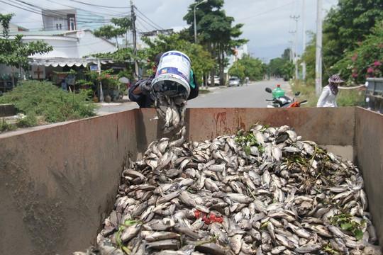 Đến bao giờ cá mới ngừng chết tại các hồ điều tiết Đà Nẵng? - Ảnh 1.