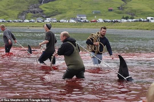 Hàng chục cá voi bị giết, máu nhuộm đỏ nước quần đảo Faroe - Ảnh 6.