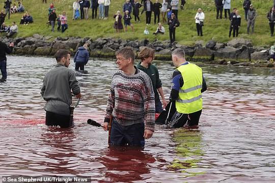 Hàng chục cá voi bị giết, máu nhuộm đỏ nước quần đảo Faroe - Ảnh 5.
