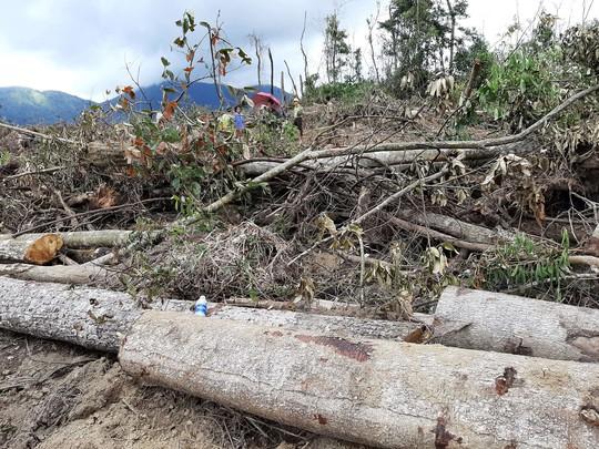 Lâm Đồng: Lại phát hiện phá rừng hàng chục năm tuổi - Ảnh 6.