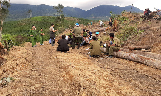 Lâm Đồng: Lại phát hiện phá rừng hàng chục năm tuổi - Ảnh 3.