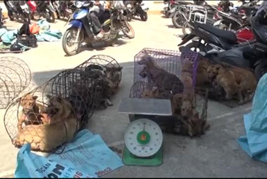 Clip, hình ảnh đường dây trộm chó hơn 100 tấn ở Thanh Hóa - Ảnh 4.