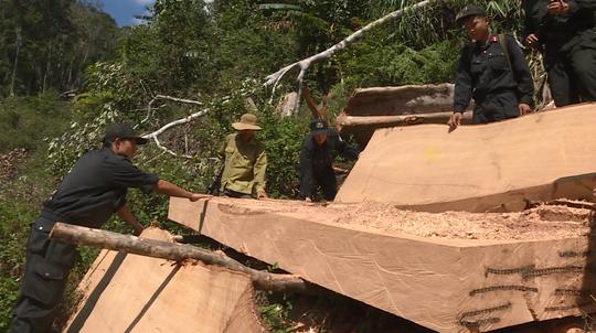 Vụ điều công an khác địa bàn đi bắt gỗ lậu: VKSND yêu cầu chuyển vụ án lên tỉnh - Ảnh 1.