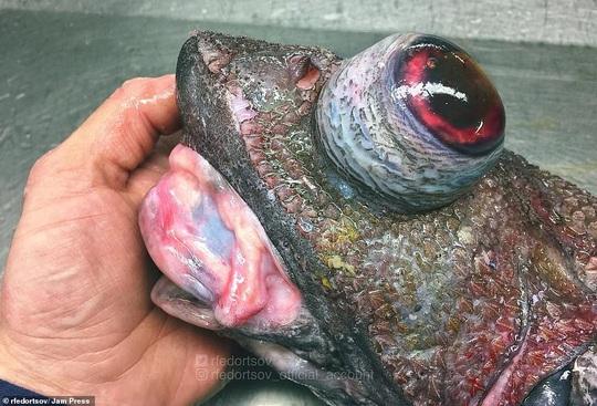 Bộ sưu tập sinh vật dưới đáy biển mới nhìn đã sợ - Ảnh 10.