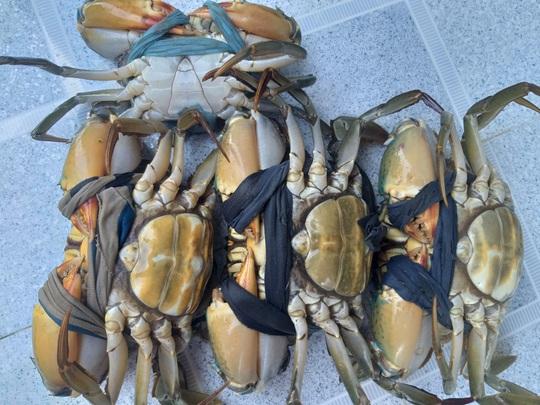 Lý do cua biển ngon nhất miền Tây trúng giá dịp Tết Canh Tý - Ảnh 8.