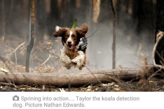 Cháy rừng ở Úc: Ấm áp tình người - thú - Ảnh 6.