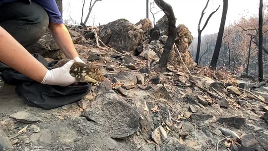 Cháy rừng ở Úc: Ấm áp tình người - thú - Ảnh 7.