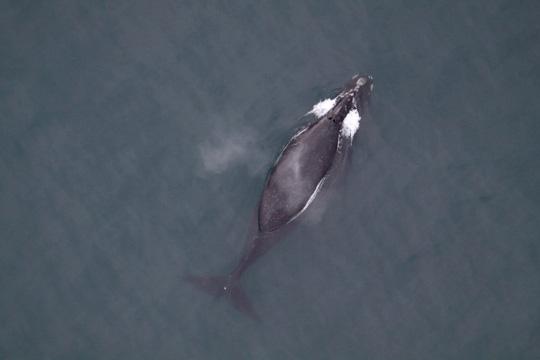 Từ heo móng đỏ đánh đàn piano tới cá voi thất tình sầu muộn - Ảnh 3.
