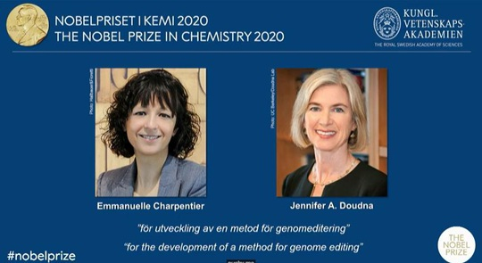 Giải Nobel Hóa học 2020 đã có chủ - Ảnh 1.