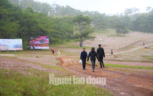 Không tổ chức mùa hội cỏ hồng Langbiang Đà Lạt 2020 - Ảnh 3.