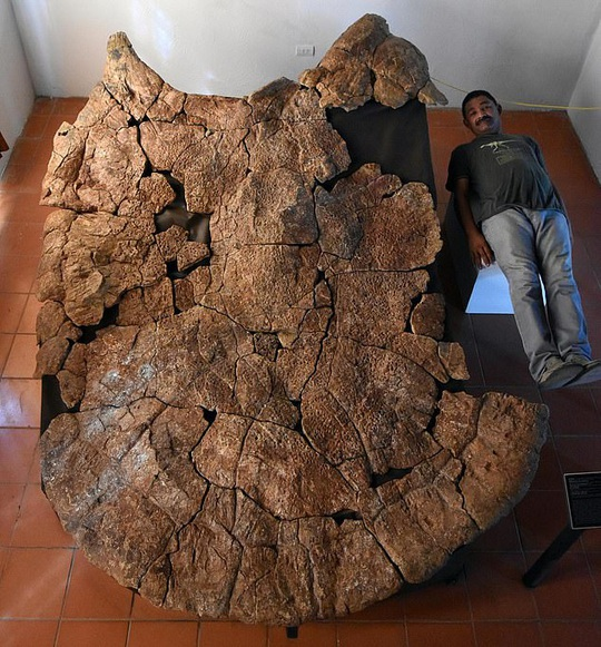 Choáng váng thủy quái bọc thép 10 triệu tuổi xuất hiện giữa sa mạc - Ảnh 1.
