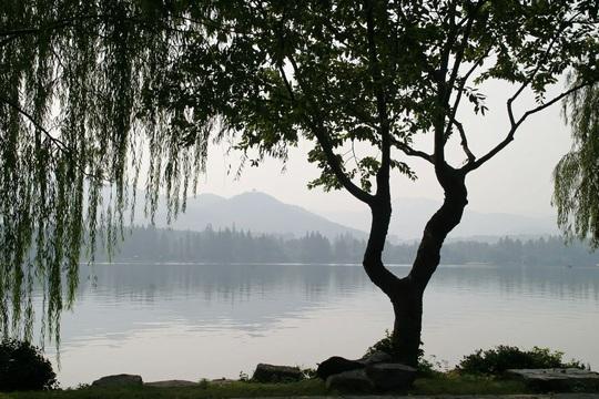 Tìm thấy chất chống nhiều loại ung thư trong cây cảnh hay gặp ở Việt Nam - Ảnh 1.