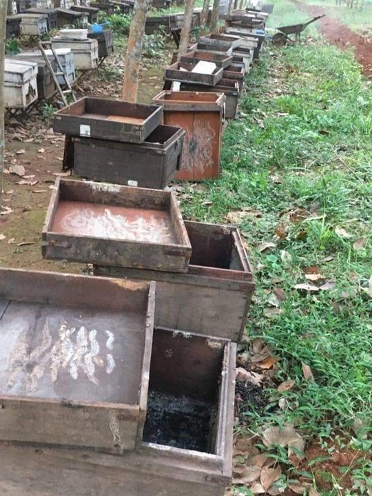 Ong nuôi chết la liệt, chủ nghi bị đầu độc bằng hóa chất - Ảnh 2.