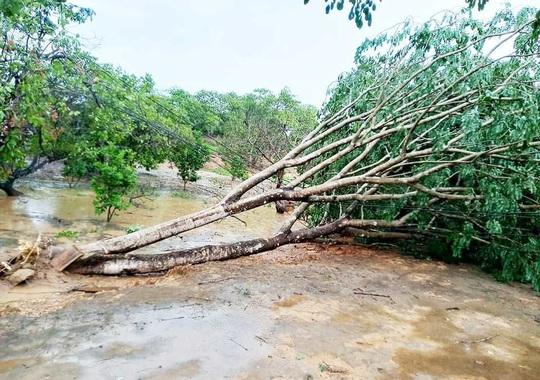 Lâm Đồng: Lốc xoáy đầu mùa mưa hàng chục căn nhà bị tốc mái - Ảnh 5.