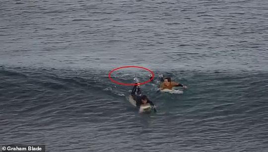 Sống sót nhờ đấm vào mặt cá mập - Ảnh 1.
