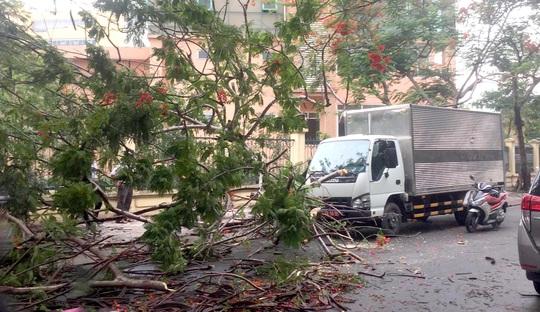TP HCM: Phượng vĩ kế trường đại học bật gốc, đè xe tải trong cơn mưa - Ảnh 3.
