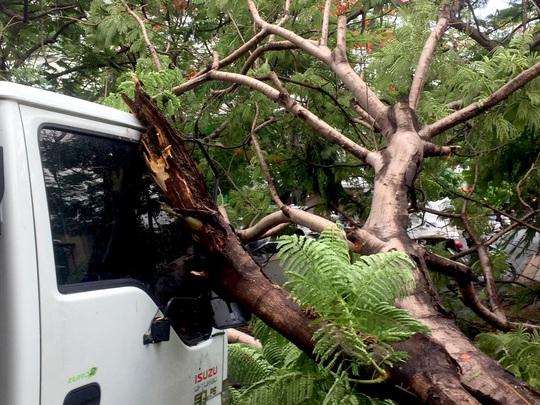 TP HCM: Phượng vĩ kế trường đại học bật gốc, đè xe tải trong cơn mưa - Ảnh 1.