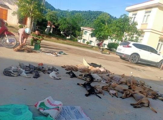 Bắt đôi nam nữ trộm 30 con chó, mèo trong đêm - Ảnh 3.