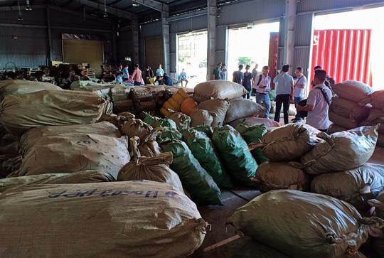 Đà Nẵng: Hơn 103 tấn dược liệu từ Trung Quốc đội lốt củ quả sấy khô cập cảng Tiên Sa - Ảnh 1.