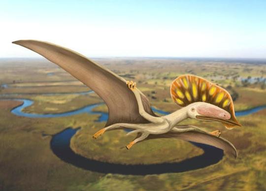 Phát hiện quái điểu chưa từng thấy mang dòng máu khủng long - Ảnh 1.