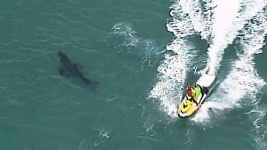 Lao ra đánh cá mập vẫn không cứu được cụ ông 60 tuổi - Ảnh 1.