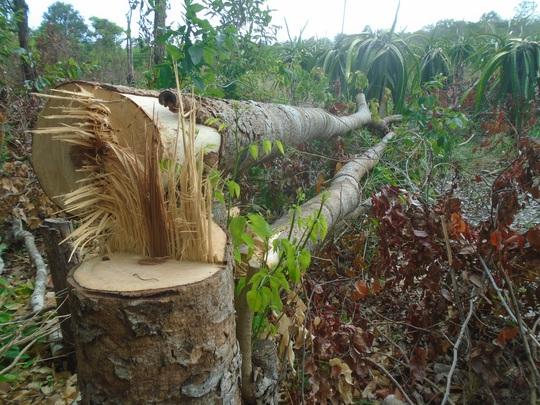 Bình Thuận: Yêu cầu lập chuyên án điều tra vụ đầu độc Khu bảo tồn Tà Cú  - Ảnh 1.