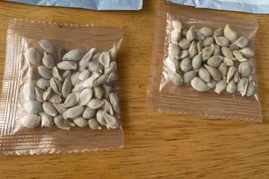 Trung Quốc nói không biết gì về hạt giống lạ gửi đến Mỹ - Ảnh 1.