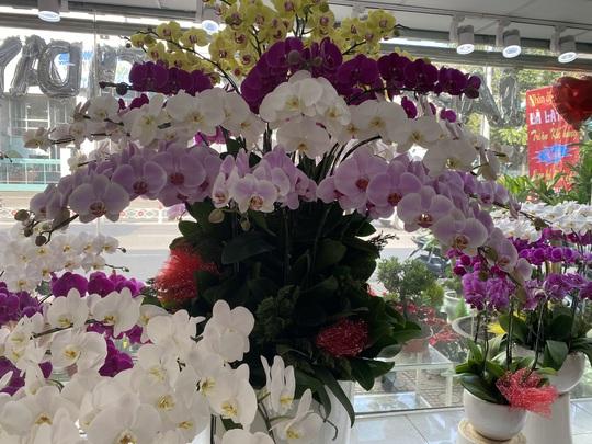 Hoa kiểng Tết đổ ra đường bán sớm, giá còn khá rẻ - Ảnh 5.