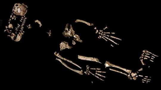 Sốc: loài 4,4 triệu tuổi biến đổi nhảy vọt từ tinh tinh thành con người - Ảnh 2.