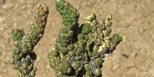 Giật mình với loài hoa lan xấu xí nhất thế giới - Ảnh 2.