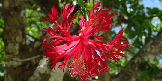 Giật mình với loài hoa lan xấu xí nhất thế giới - Ảnh 3.