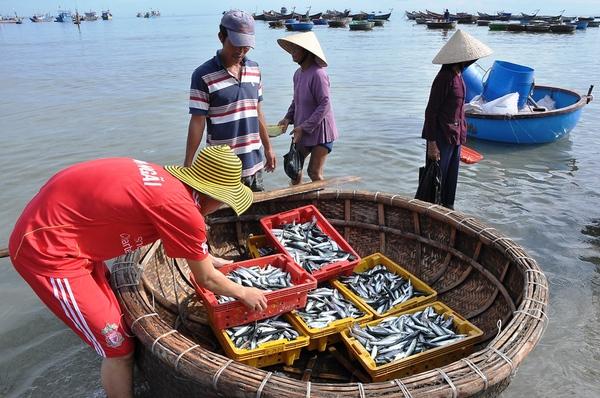 Tàu cá nằm bờ do vướng chính sách