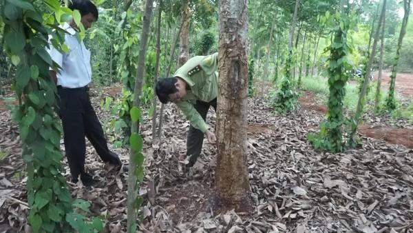 Nghi vấn vợ phó chủ tịch xã hủy hoại rừng phòng hộ