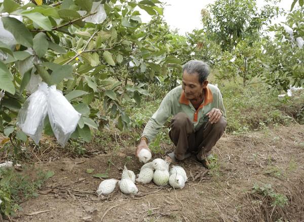 Nông sản vùng biên lại rớt giá thê thảm