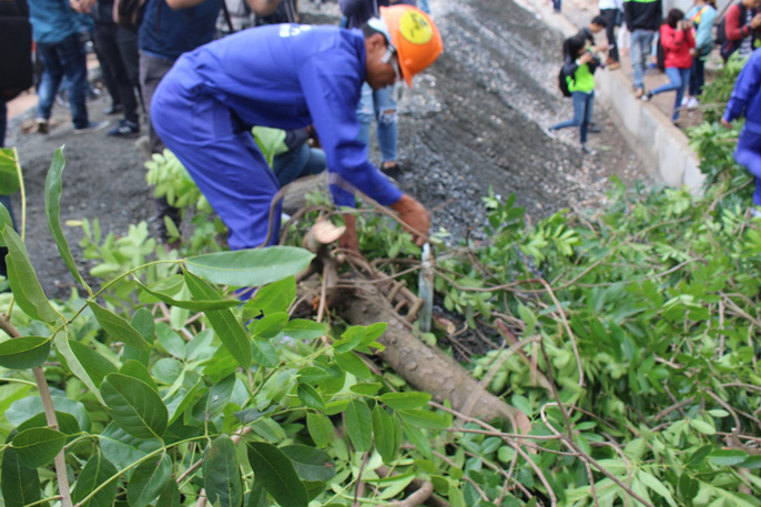 Bắt đầu chặt hạ gần 1.300 cây xanh trên đường Phạm Văn Đồng - Ảnh 3.