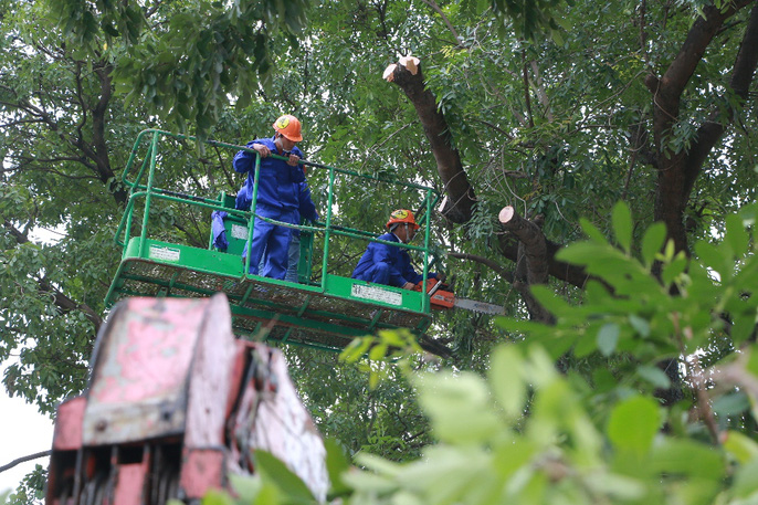 Bắt đầu chặt hạ gần 1.300 cây xanh trên đường Phạm Văn Đồng - Ảnh 5.