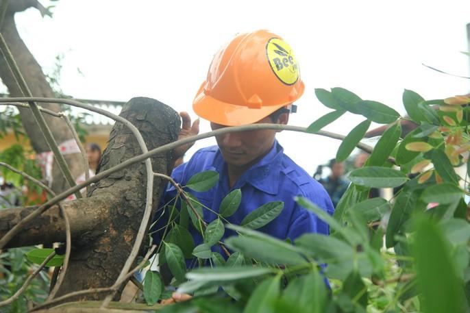 Bắt đầu chặt hạ gần 1.300 cây xanh trên đường Phạm Văn Đồng - Ảnh 6.
