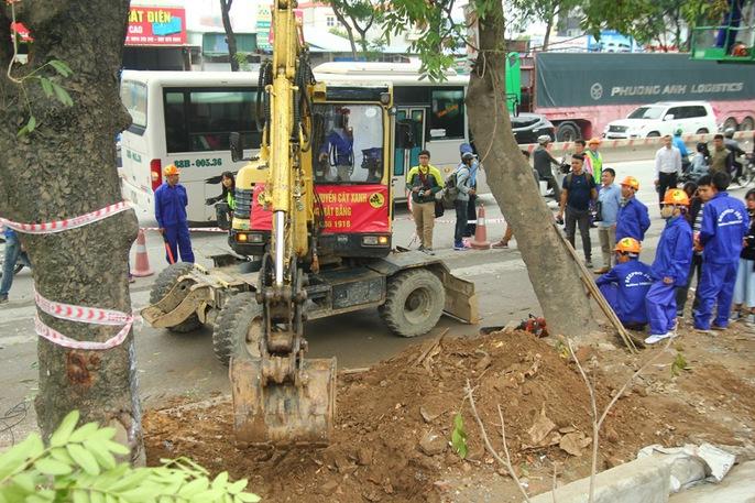 Bắt đầu chặt hạ gần 1.300 cây xanh trên đường Phạm Văn Đồng - Ảnh 10.